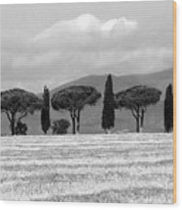 Tuscany Trees Wood Print by Julian Perry