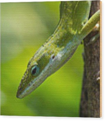 Green Lizard Wood Print by Willard Killough III