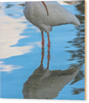 An Ibis Reflecting Wood Print by Ed Gleichman