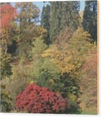 Autumn In Baden Baden Wood Print by Travel Pics