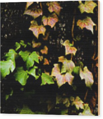 Autumn Leaves Wood Print by Parker Cunningham