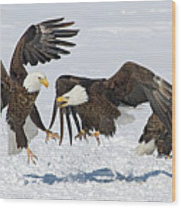 Bald Eagle's Wood Print by Wesley Aston
