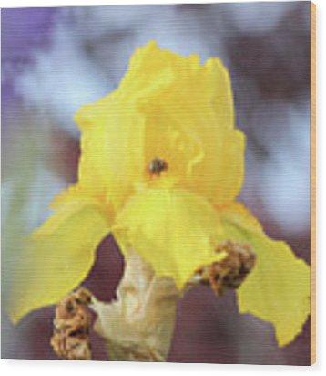 Bee In An Iris Bloom Wood Print by Ann E Robson