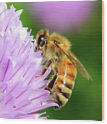 Bee On Chive Flower Wood Print by Ann E Robson