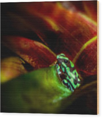 Black And Green Dart Frog In The Red Bromeliad Wood Print by Rikk Flohr