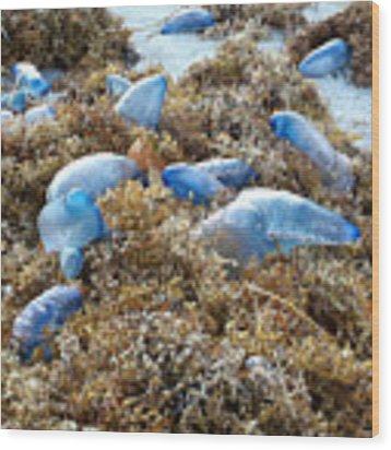 Seeing Blue At The Beach Wood Print by Karen Zuk Rosenblatt
