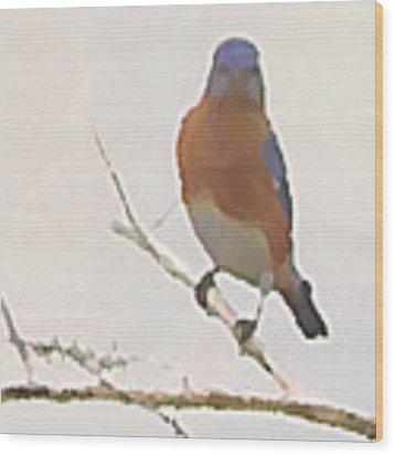 Bluebird Stare  Wood Print by Shelli Fitzpatrick