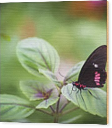 Brave Butterfly  Wood Print by Cindy Lark Hartman