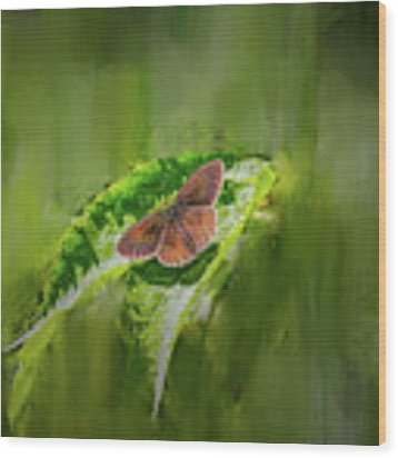 Brown Butterfly #h6 Wood Print by Leif Sohlman