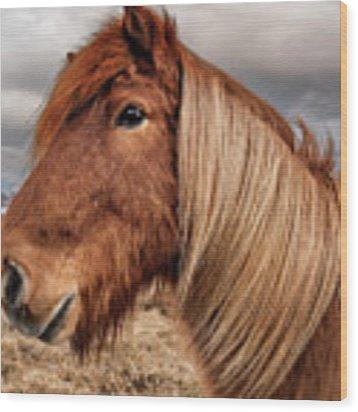 Bushy Icelandic Horse Wood Print by Pradeep Raja PRINTS