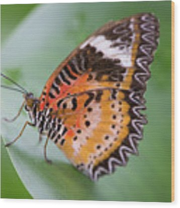 Butterfly On The Edge Of Leaf Wood Print by John Wadleigh