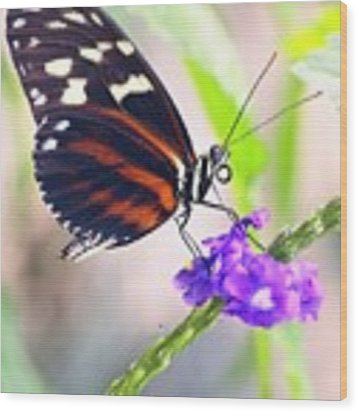 Butterfly Side Profile Wood Print by Garvin Hunter