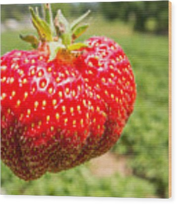 Close Up Shot Strawberry With Planting Strawberry Background Wood Print by Alex Grichenko
