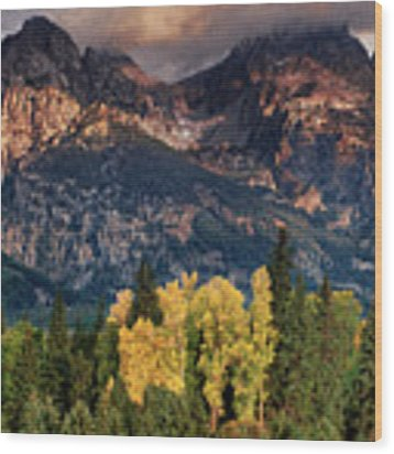 Cottonwoods Fir Trees Fall Color Grand Tetons Nat Wood Print by Dave Welling