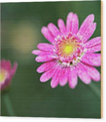 Daisy Flower Wood Print by Pradeep Raja Prints