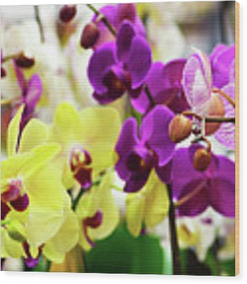 Decorative Orchids Still Life C82418 Wood Print by Mas Art Studio