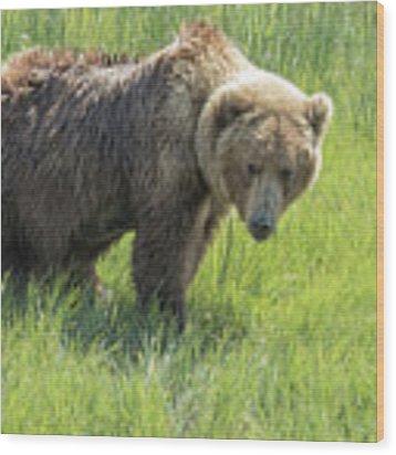 Don't Mess With Mama Bear Wood Print by Belinda Greb