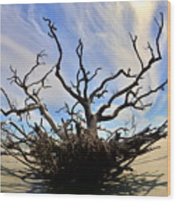 Driftwood And Roots Hunting Island Sc Wood Print by Lisa Wooten