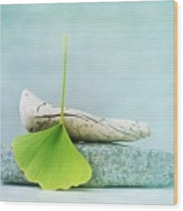 Driftwood Stones And A Gingko Leaf Wood Print