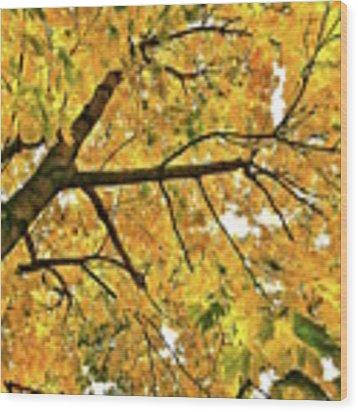 Fall On William Street Wood Print by Al Harden