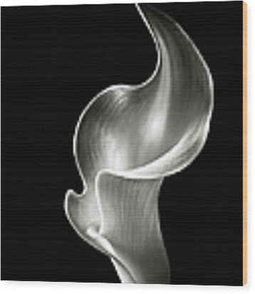Flame Calla Lily In Black And White Wood Print