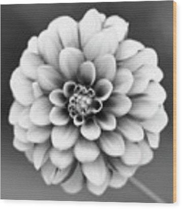 Graytones Flower Wood Print