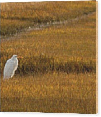 Great Egret In Morning Light Wood Print by Kristia Adams
