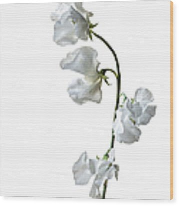 Japanese Sweet Pea Wood Print by Endre Balogh