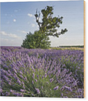 Lavender Provence  Wood Print by Juergen Held