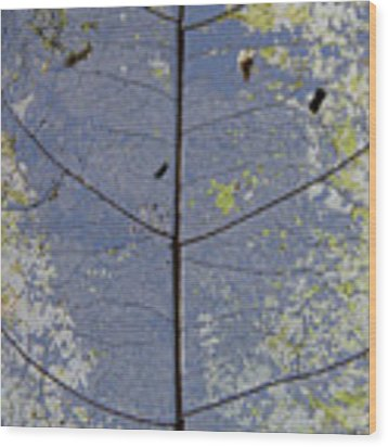 Leaf Structure Wood Print by Debbie Cundy