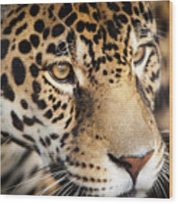 Leopard Face Wood Print by John Wadleigh