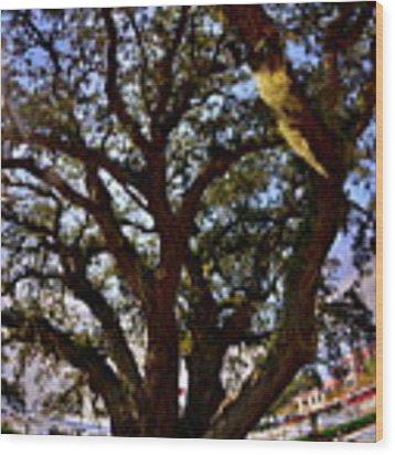Liberty Oak Harbour Town Hilton Head Sc Wood Print by Lisa Wooten