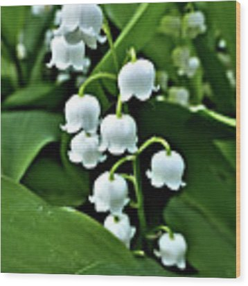 Lilly Of The Valley Flowers Wood Print by Jeremy Hayden