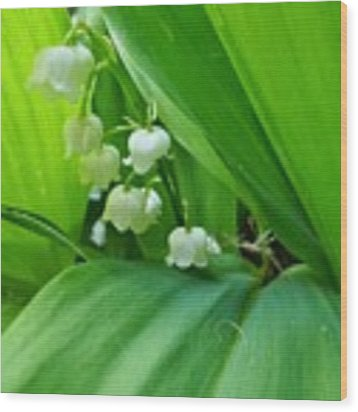 Lily Of The Valley Wood Print by Jeremy Hayden