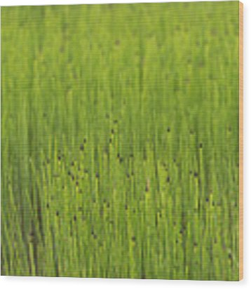 Lush Wood Print by Doug Gibbons