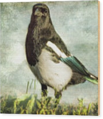 Message From The Magpie Wood Print by Belinda Greb