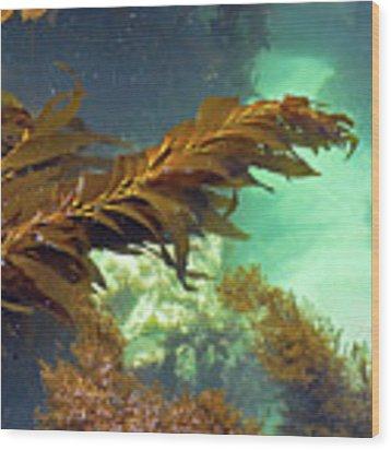 Monterey Bay Seaweed Wood Print by Susan Wiedmann