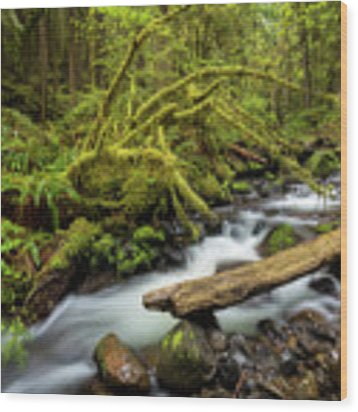 Mount Hood Creek Wood Print by Jon Ares