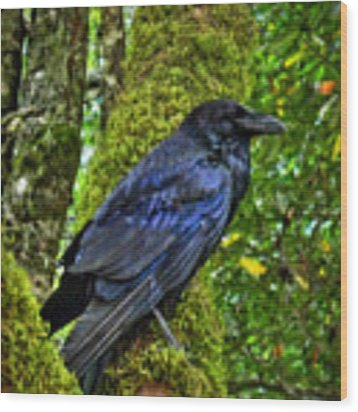 Muir Woods Raven 001 Wood Print by Lance Vaughn