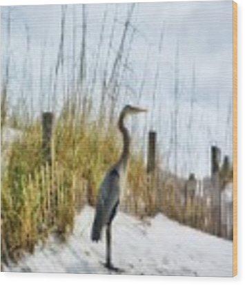 Norriego Point Heron Wood Print by Mel Steinhauer