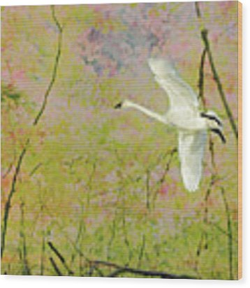 On The Wing Wood Print by Belinda Greb