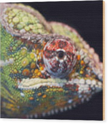 Panther Chameleon  Wood Print by Nathan Rupert