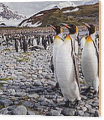 Penguins Of Salisbury Plain Wood Print by Karen Lunney