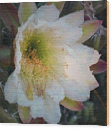 Prickley Pear Cactus Wood Print by Kate Word