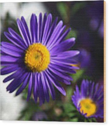 Purple Daisy Wood Print by Yew Kwang