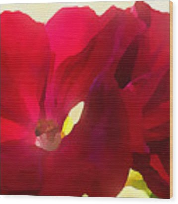 Red Velvet Twin Geraniums  Wood Print by Shelli Fitzpatrick
