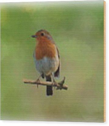 Robin-1 Wood Print by Paul Gulliver
