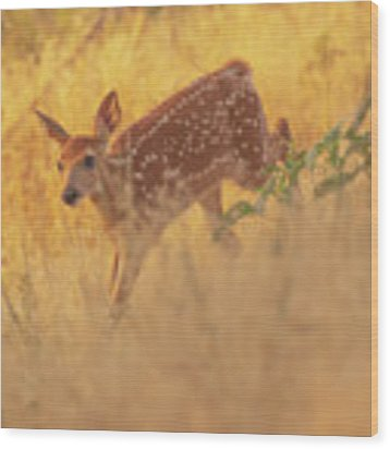Running In Sunlight Wood Print by John De Bord