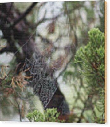 Spider Web In Tree Wood Print by Willard Killough III