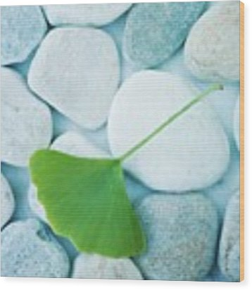 Stones And A Gingko Leaf Wood Print